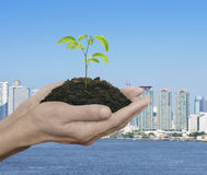 Hands holding a fresh small plant with soil over city tower and Royalty Free Stock Photography