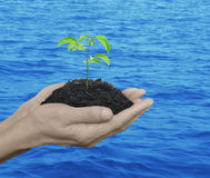 Hands holding a fresh small tree Stock Photos