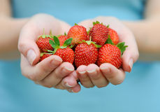 Hands holding fresh strawberries Stock Photos