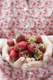 Hands holding fresh strawberries Stock Images