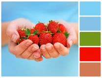 Hands holding fresh strawberries with palette color swatches Royalty Free Stock Images