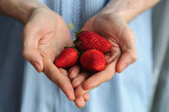 Hands holding fresh strawberry with blurred shirt on background Stock Photography