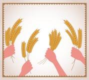 Hands holding fresh wheat Stock Photo