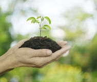 Hands holding a fresh young plant with soil over green tree boke Stock Photos