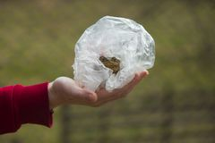 Hands holding frog. In plastic bag royalty free stock images