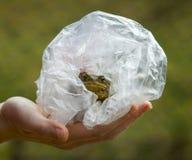 Frog in plastic bag. Hands holding frog in plastic bag stock photo