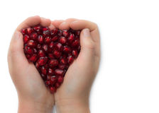 Hands holding fruit, Royalty Free Stock Photography