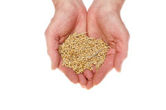 Hands holding grain Royalty Free Stock Image