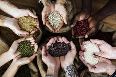 Free Hands Holding Grains And Photoshooting Stock Image - 101849461