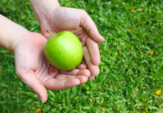 Hands holding green apple Stock Photography