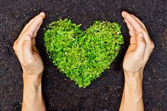 Hands holding green heart shaped tree. / tree arranged in a heart shape / love nature / save the world / heal the world / environmental preservation royalty free stock photos