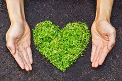 Hands holding green heart shaped tree Stock Photo