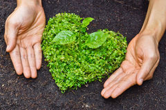 Hands holding green heart shaped tree. / tree arranged in a heart shape / love nature / save the world / heal the world / environmental preservation stock photo
