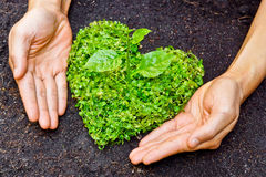 Hands holding green heart shaped tree. / tree arranged in a heart shape / love nature / save the world / heal the world / environmental preservation stock photography