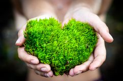 Hands holding green heart shaped tree love nature save the world heal the world environmental preservation stock photography