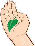 Hands holding green leaf Stock Photos
