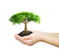 Hands holding green plant Royalty Free Stock Image