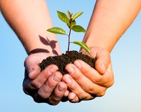 Hands holding green plant Stock Images
