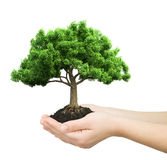 Hands holding green plant  Royalty Free Stock Photos