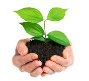 Hands holding green plant Stock Photo