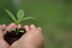 Hands holding green plant sapling. Stock Photography