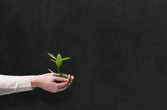 Hands holding green plant. Hands holding green small plant Stock Photos