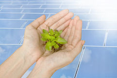 Hands holding green plant on solar cells Royalty Free Stock Images