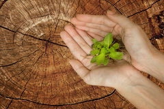 Hands holding green plant on stump tree Stock Photography