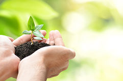 Hands holding green seedling with soil