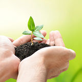 Hands holding green seedling with soil Royalty Free Stock Photography