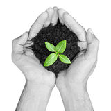 Hands holding green seedling with soil Stock Photos