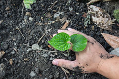Hands holding green sprout with soil Stock Photography
