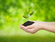 Hands holding green tree Stock Images