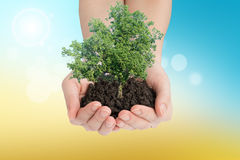 Hands holding green tree with mould Stock Photo