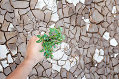 Hands holding green tree sprout. On cracked ground Stock Photography