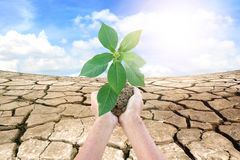 Hands holding a green young plant Royalty Free Stock Photography