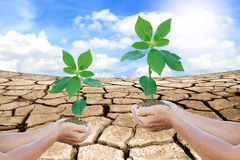 Hands holding a green young plant Royalty Free Stock Photo