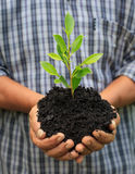 Hands holding a green young plant.  Stock Image