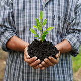 Hands holding a green young plant.  Stock Photography