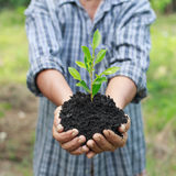 Hands holding a green young plant.  Royalty Free Stock Images