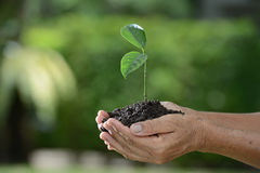 Hands holding a green young plant Stock Photo