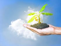 Hands holding the growth plant a tree with sky and cloud cloud heart shape background. Earth Day and Save world conservation wild stock images