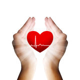 Hands holding heart. An illustration of hands holding a beating heart stock photos
