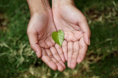 Hands holding heart shaped green leaf Stock Photos