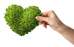 Hands holding a heart shaped green leafs Royalty Free Stock Photography