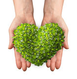 Hands holding a heart shaped green leafs Royalty Free Stock Image