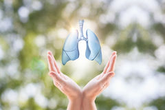 Hands holding human lungs. Hands holding human lungs on blurred background royalty free stock photography