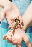 Hands holding insect Royalty Free Stock Photography