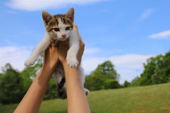 Hands holding a kitten Stock Photography