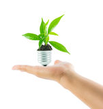 Hands holding lamp light bulb new life plant Stock Images